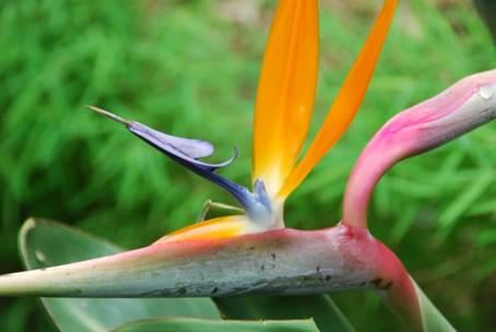 Botanical Garden, Pamplemousse, Mauritius