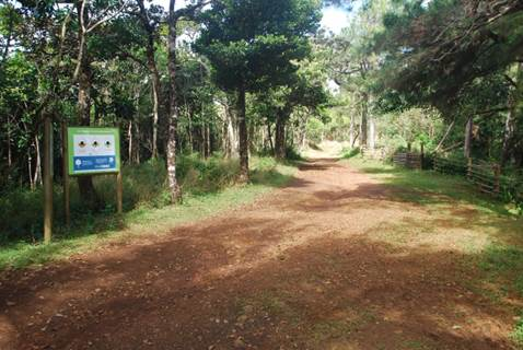 Hiking trail, Black River Gorges National Park