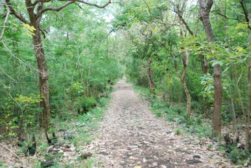Forest track 1