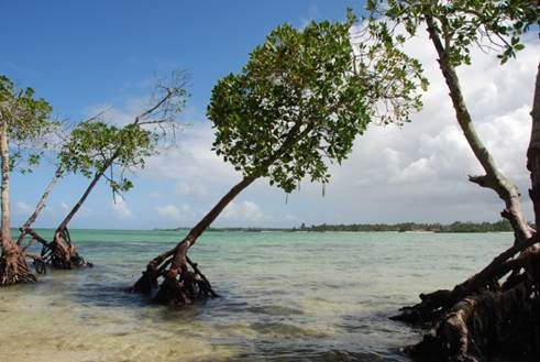 Mangroves on the South coast of Mauritius